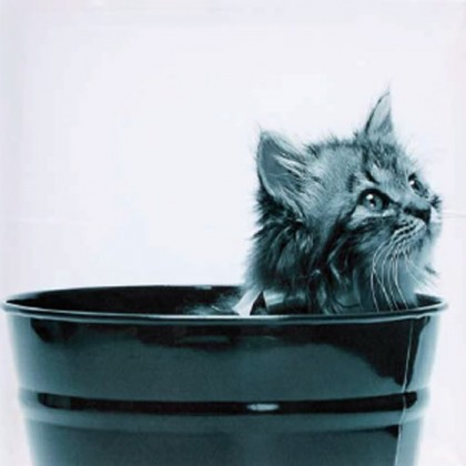 3 dílný obraz Cat 40x40 cm