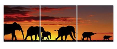 Obraz sada, 3ks (sloni afrika)